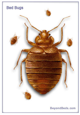 What Chemicals Can Be Used To Kill Bed Bugs